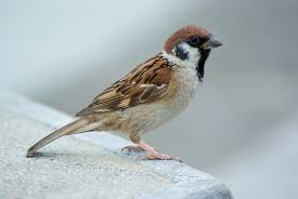 Fear and Sparrows — Luke 12:4–7